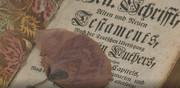 Mit Liebe bewahrt: Gepresste Blume in einer der ausgestellten Familienbibeln (Foto: Still aus dem Film zur Ausstellung)