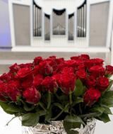 Eine Rose in der Lutherkirche zum Segen für jeden (Foto: A. Siggelkow)