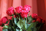 """""""Für mich soll´s rote Rosen regnen"""" heißt es zu Mitternacht im Kirchenpavillon: Lassen Sie sich beschenken und segnen! (Foto: Joachim Gerhardt)"""