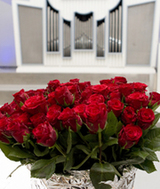 Am Rosensonntag verlieh der Papst einst eine Rose einem besonders würdigen Menschen. Diese Tradition hat auch im Karneval prägende Spuren hinterlassen (Foto: A. Siggelkow)
